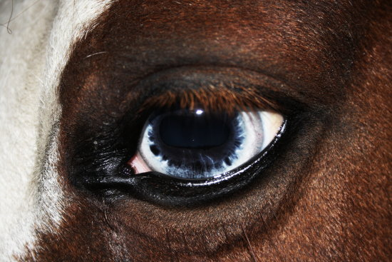 horse eye colours differences