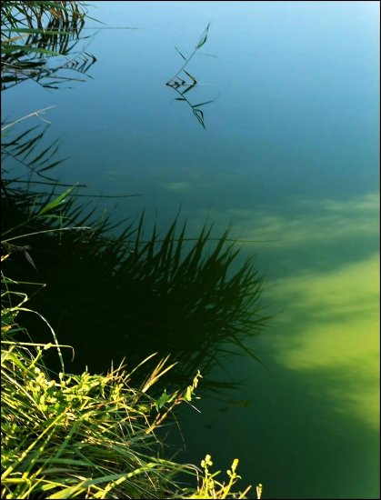 JUST .... WEED & REFLECTION IN BLOODY LAKE ....