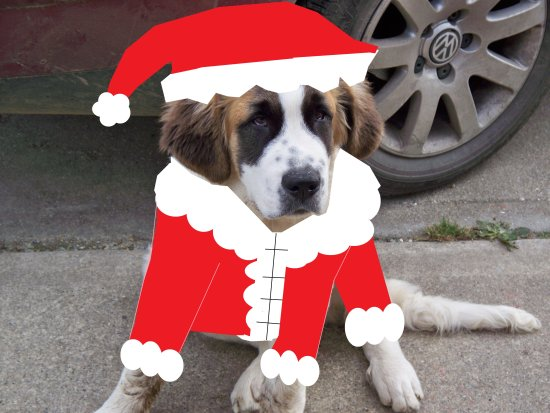 this is bruno ready for x-mas