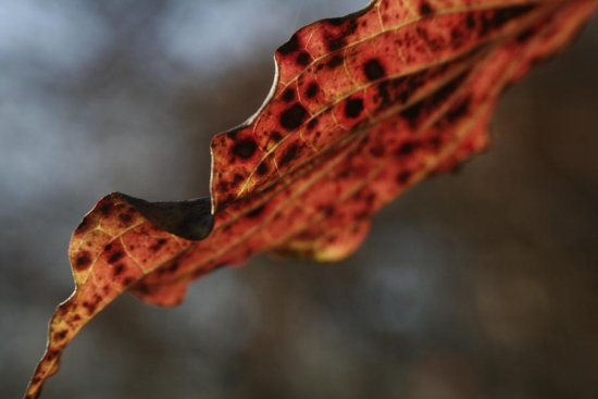 leaf macro light fall colors
