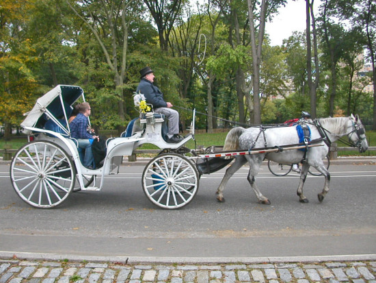 centralpark newyorkcity park autumn horse carriage nyc2011fph whitefph