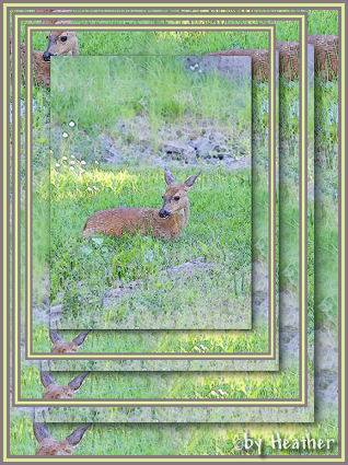 more messing with photos...my deer in my backyard