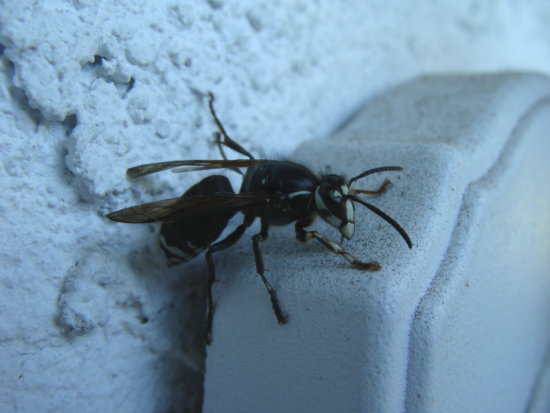 nature winter wasp 2012