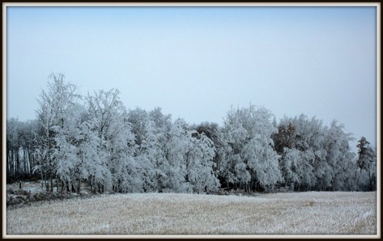 Hoar Frost on a Grey DY