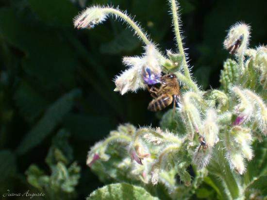 nature animal bee insect flower plant