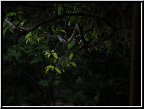 I took this picture when the sun rays was falling on the edge of the tree, thats the reason just ...