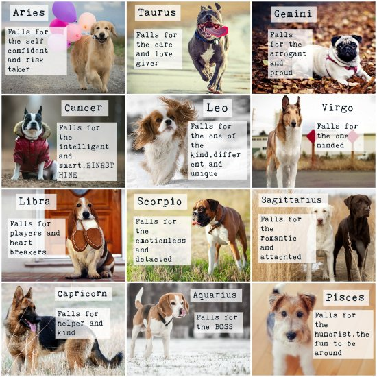 What Dog Breed Are You Based On Your Zodiac
