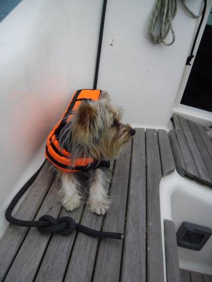 On the sailboat