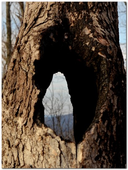 tree hole ozarks nature