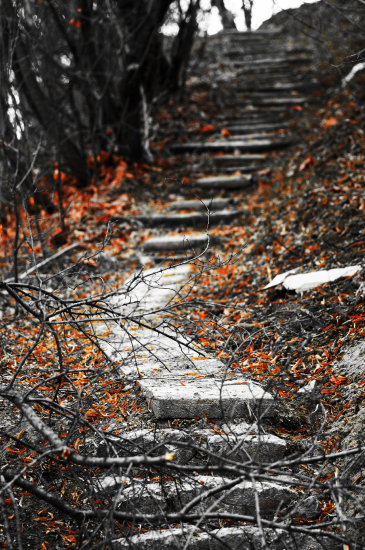 stairs stairway to heaven fallen leaves our winter together sighisoara