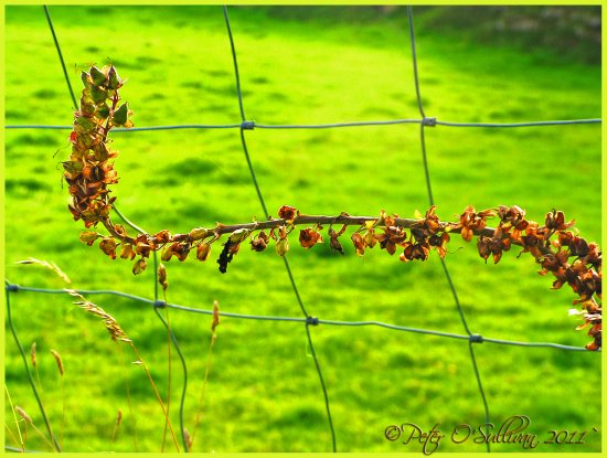 Branch Fence Laughtacallow Keel Kerry Ireland Peter OSullivan