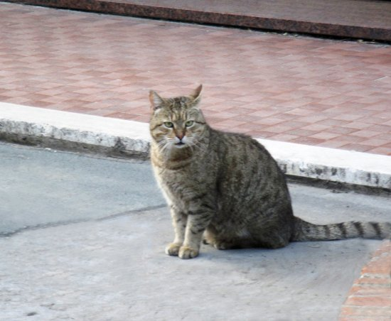 Sole (Sun) waiting for his owner to get out of the shop (where she get his food). Smart cat!