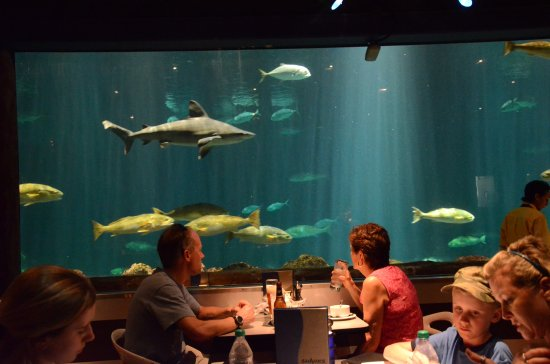 seaworld orlando florida restaurant underwater people fish - Underwater World Restaurant