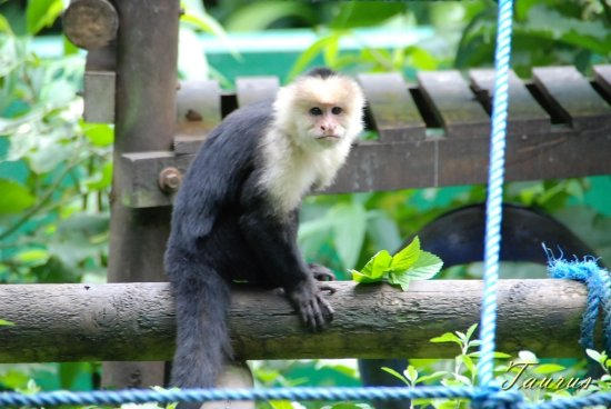 animal monkey zoo Costa Rica