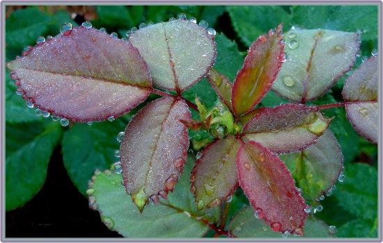 raindrops leaves