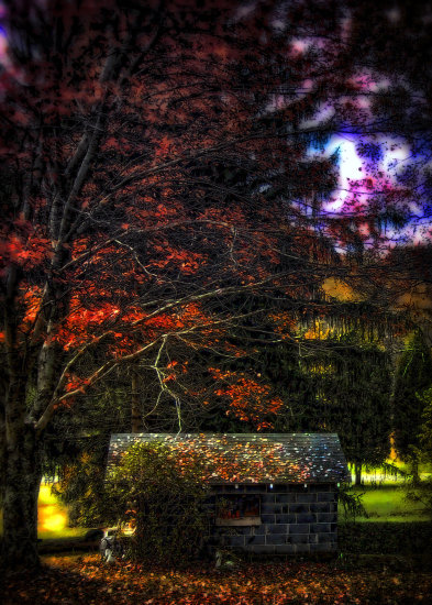 autumn fall yellow red orange leaves shed dark nature