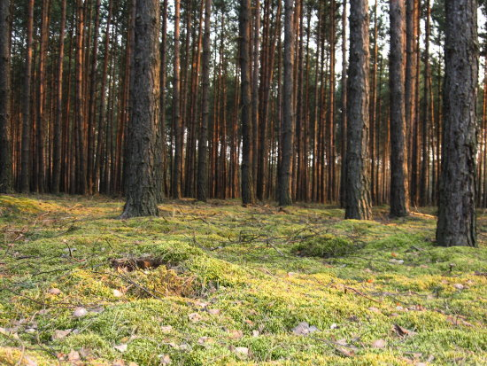 this pic was taken during my 'search for the hobbits' :) in the forest near my hometown