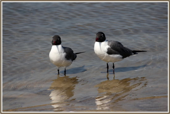 reflectionthursday birds gulfofmexico florida