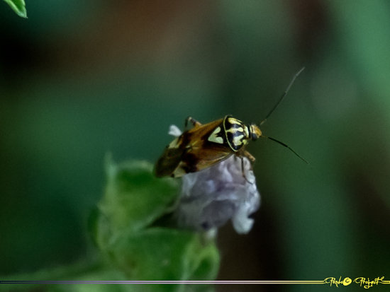 Insetti Insect