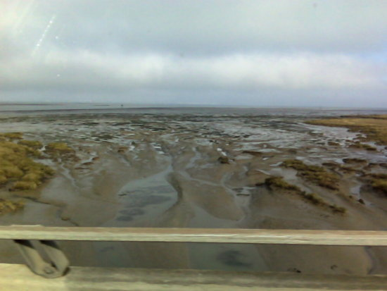 humboldt bay eureka california low tide