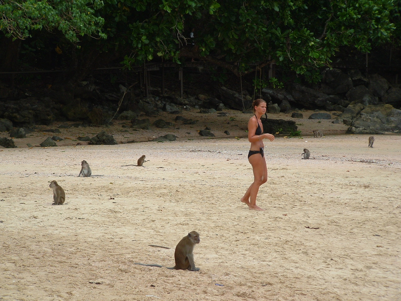 The monkeys of Ao Nang beach waiting for food from the ...