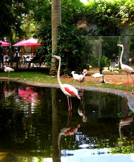 birds Flamingo lumaciel