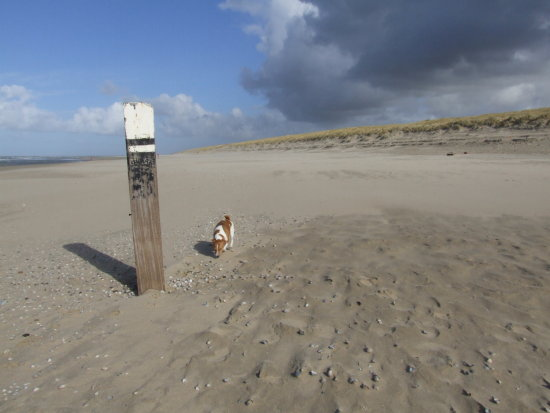 short break Texel