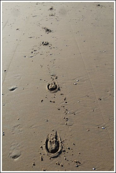 Following the horse hoof prints.... Where did they come from....;-)