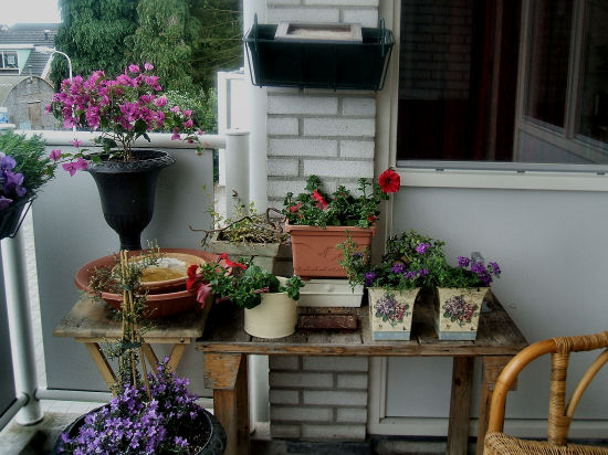 Flowers balcony