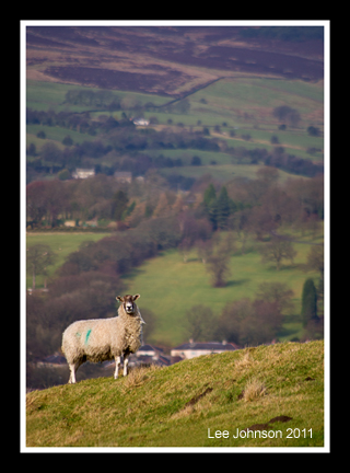 Landscape Sheep Lancashire Hillside Farming Spideylj