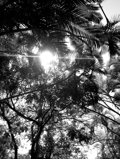palm palms tree light sun hope glimpse