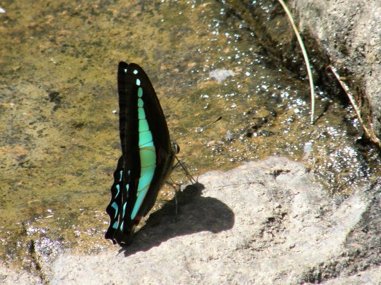 nature butterfly blue triangle