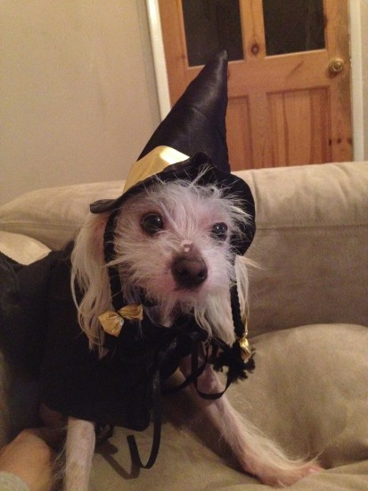 The Wicked Witch of the Wight