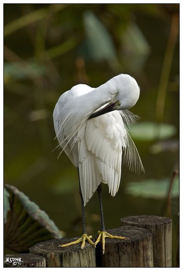 pet animal egret