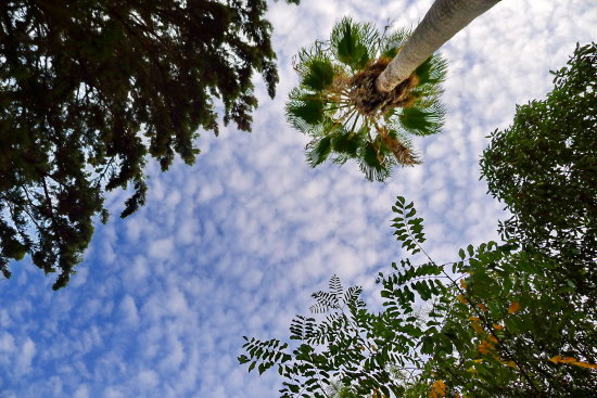 sky clouds trees palm