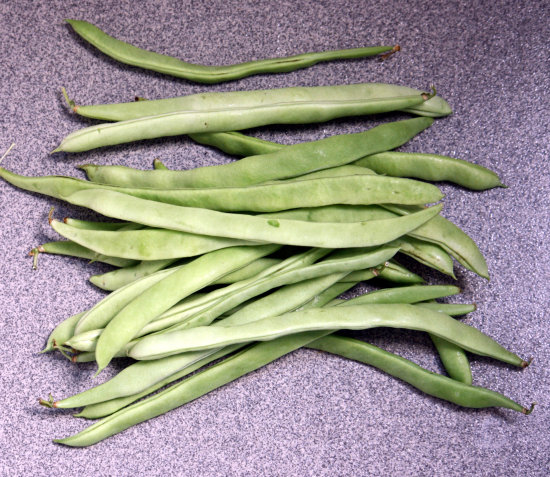 Green beans (French Beans, string beans, snap beans)
