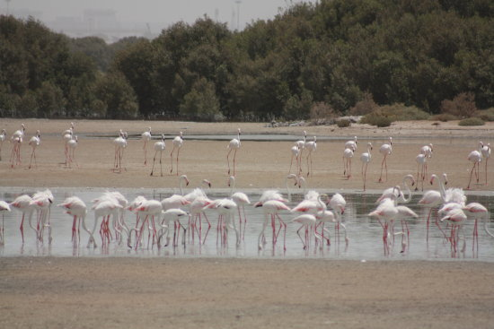 flamingos bird nature reserve pink