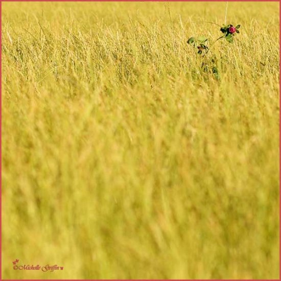 long grass flower wild pink