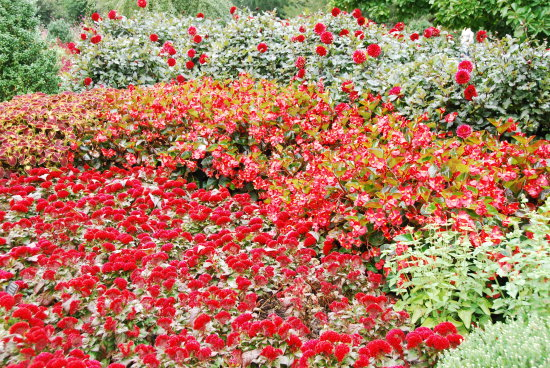 A small section of one of the flower beds at Longwood Gardens Pennsylvania.