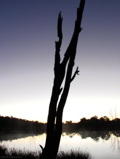 refelctionthursday day dead tree silhouette perth littleollie