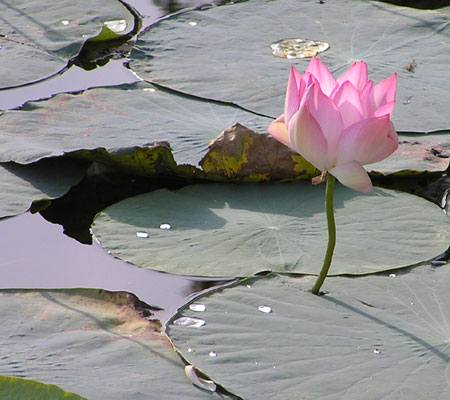 plant water nature flower leaf