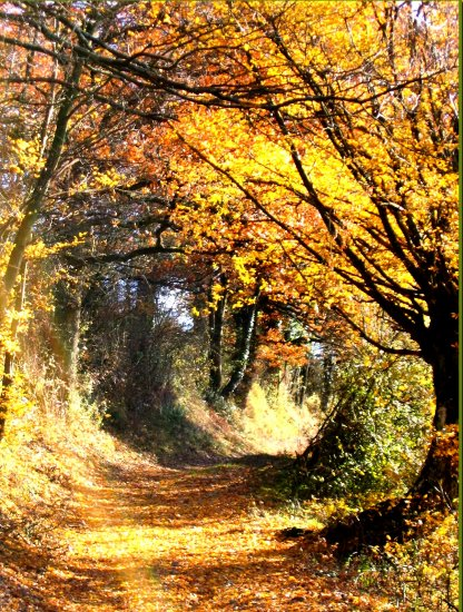 autumn path France november trees nature landscape
