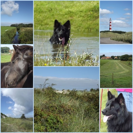 Holland Ameland Oerd