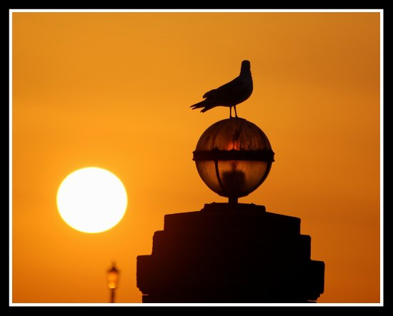 sun sunset lamp sphere gull bird nature seagull ilfracombe devon somersetdreams