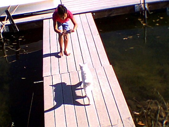 sister cat dock lake