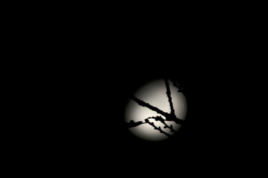 Thanks for the Birthday wishes everyone!  Taken last night, moon through the tree.