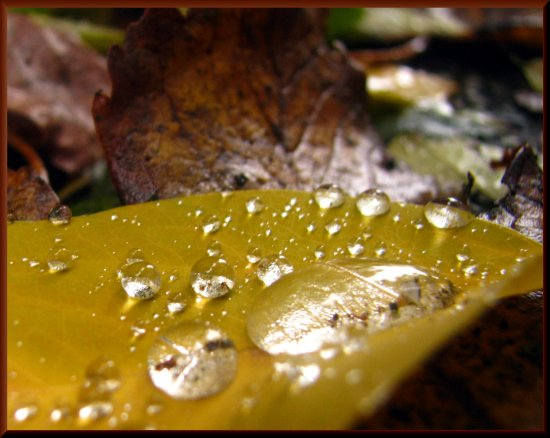 autumn drop balis macro barbara