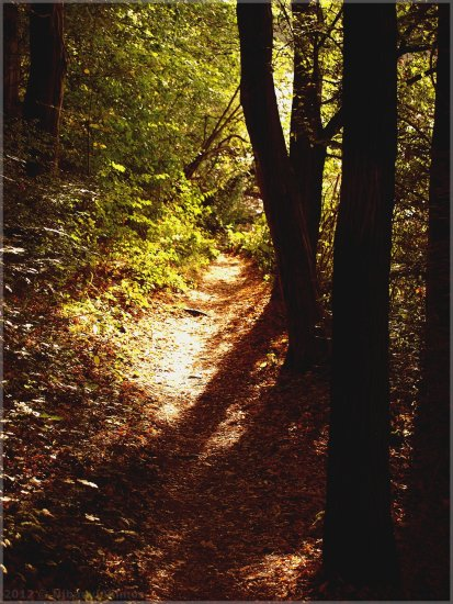 landscape forest tree bush path autumn leaves shadow light