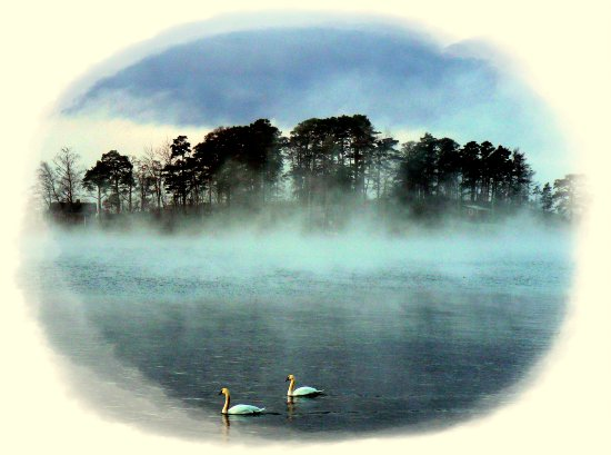 swans animals fog winter Finland seascapes