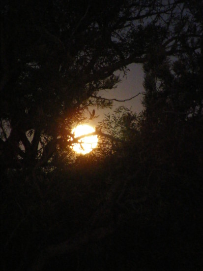 full moon rising through the trees nature